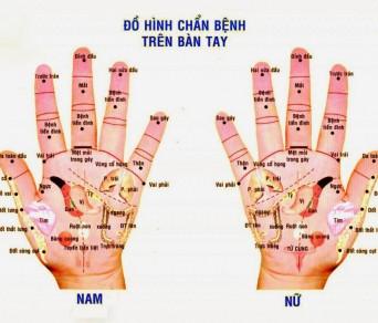 Ấn 5 đầu ngón tay, biết ngay sức khỏe và bệnh tật của các cơ quan nội tạng